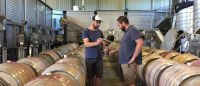 Checking 2017 Pinot Noir Barrels